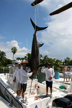 Large swordfish caught offshore from Miami